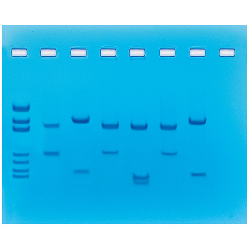 Student Exploration Dna Fingerprint Analysis Worksheet ...