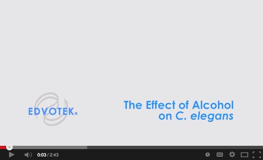 The Effect of Alcohol on C. elegans