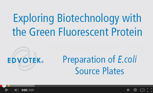 Preparation of E. coli Source Plates