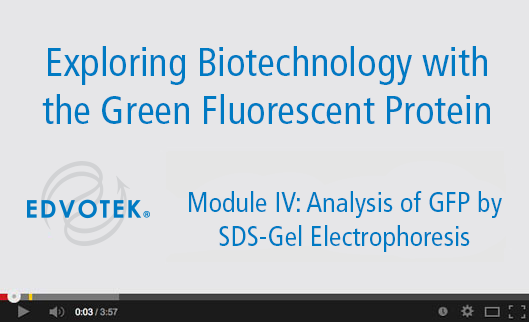 Module IV: Analysis of GFP by SDS-Gel Electrophoresis