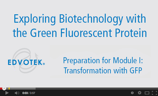 Preparation for Module I: Transformation with GFP