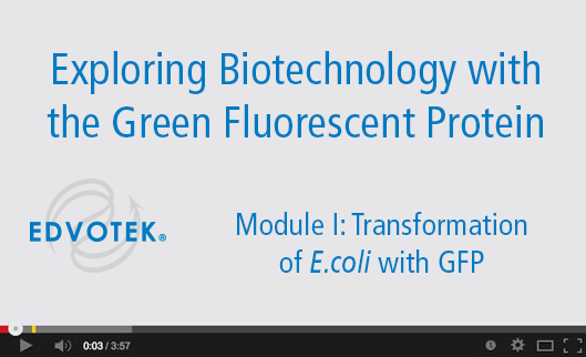 Module I: Transformation of E. coli with GFP