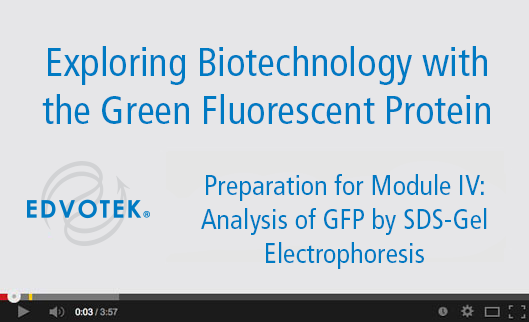 Preparation for Module IV: Analysis of GFP by SDS-Gel Electrophoresis