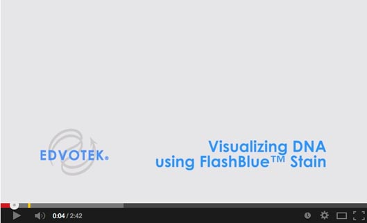 Visualizing DNA Using FlashBlue™ Stain