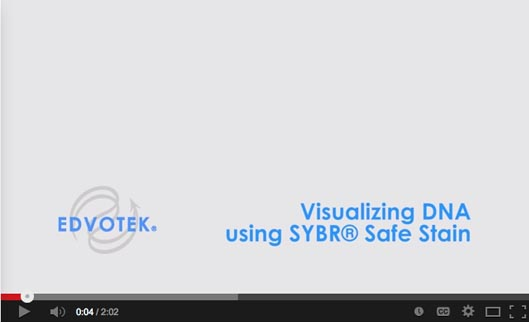 Visualizing DNA Using SYBR® Safe Stain